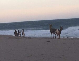 deer beach (1)